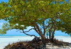 Albury Court Hotel - Key West - คีย์เวสต์ - ชายหาด
